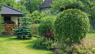 Zahrada s rájem zelených ostrůvků