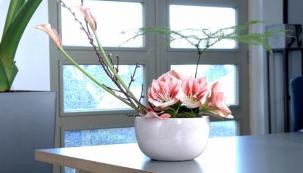 Barevné květy pro lepší náladu