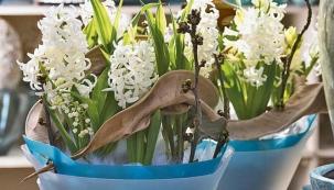 Jarní hyacintová výzdoba