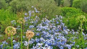 Návštěva zahrady na Korsice