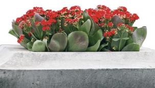 Čím osadit letní terasy?