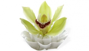 Správná pěče o domácí orchideje