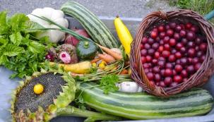 Jedlé zahrady ve městě