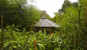Zátiší s altánkem v bambusáriu v pražské Troji. V popředí je vidět japonský bambus velkolistý Sasa palmata.