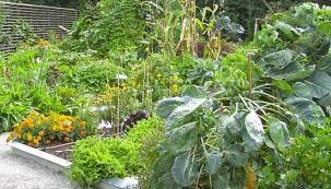 Jarní úvahy o zeleninových záhonech