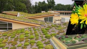 Vegetační střechy s hydrofilní vatou (ilustrační foto Isover)