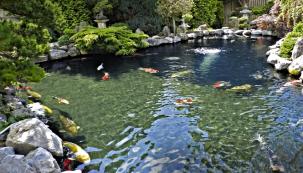 Co si přejí ryby v zahradním jezírku?