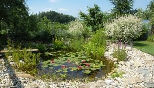 Malé zahradní jezírko má průměr mírně přes 5 metrů ahloubku asi 1 metr. Fólii velmi dobře maskují  drobné valouny, rostliny jsou mezi nimi zasazeny vněkolika velkých plastových květináčích umístěných nadno.