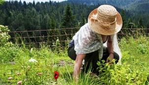 Pěstování naklasickém záhonu nebo vnádobách zvládne opravdu každý. Náročnější zahradníci však uvažují obylinkách vkontextu permakulturní zahrady.