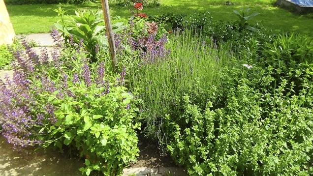 Kořeninové ačajové bylinky by se vpermakulturní zahradě měly nacházet co nejblíže vstupu dodomu, blízko kuchyně (naobr. šalvěj, levandule, dobromysl, meduňka adivizna).