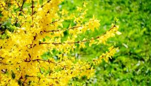Duben přináší aprílové počasí a vrací do zahrady barvy.