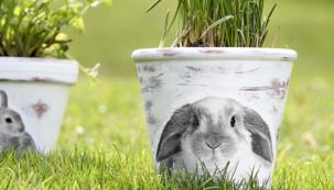 Květináče smotivem oblíbeného jarního zvířátka potěší dospělé iděti. Květináč můžete použít nabylinky nebo jako velikonoční dekoraci.