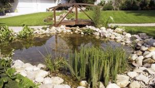 Obr. 6. Kzakrytí okrajů fólie poslouží štěrk akameny. Zrostlin lze použít například šáchor, prvosenky, lekníny či kosatce. Rostliny je však třeba rozlišit podle toho, zda jsou vhodné na břeh, do vody či do bažiny.