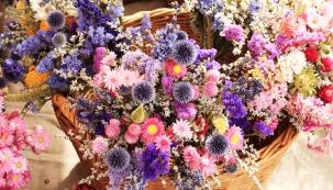 Jak ostříhat trvalky po odkvětu a čím zaplnit mezery po nich, jak dotvarovat rododendrony a azalky a jak si poradit se sušením květů do zimních vazeb - to vše se dozvíte v červencovém kalendáriu.
