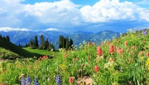 Iluze vzdálených hor, vzpomínky na letní cestování a zážitky z nádherné horské přírody. Tak zdůvodňuje většina lidí svoji domácí skalku. Často však zapomínají na správný výběr sortimentu a na požadavky skalniček.