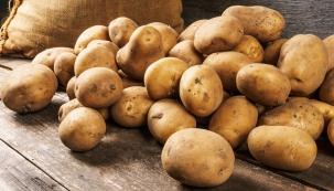 Mohlo by se zdát, že v dnešní době je téma skladování brambor v domácnostech tak, aby co nejdéle vydržely, už poněkud archaická záležitost. Ale není, věřte tomu.