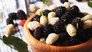 Polodlouhé plody morušovníku, černé nebo bílé podle varianty, dozrávají v polovině léta.