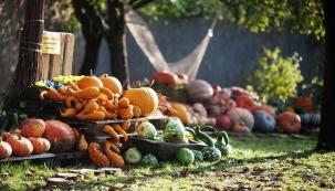 Dýňový podzim v Botanické zahradě v pražské Troji: Návštěvníky čeká výstava dýní, víkend s dýňovými hrátkami a také bohatý halloweenský program zejména pro děti a rodiče.