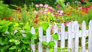 Léto se sklonilo k podzimu, dozrává ovoce a mezi ním i to nejvzácnější – hrozny vinné révy. A leckoho přitom napadne, zdali by si mohl na zahradě nějaké ty hrozny vypěstovat.