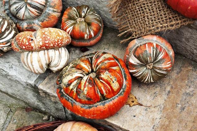 Cucurbita maxima ´Turks Turban´ patří mezi velmi známé okrasné odrůdy. Vydrží dlouho jako dekorace, snadno se vysuší anehnije.