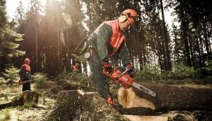 Hledáte ideálního pomocníka do lesa i na zahradu? Těžbu i přípravu palivového dřeva nebo kácení či prořezávání stromů na zahradě spolehlivě zastane benzinová řetězová pila. (Foto: MOUNTFIELD)