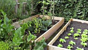 Pěstování rostlin během celé sezony je ve světě vcelku běžnou záležitostí. Existují různé způsoby, jak toho dosáhnout. Společně s odbornicí na ekozahrady Janou Novákovou nabízíme několik tipů, jak spolehlivě prodloužit vegetační sezonu v našem podnebném pásmu.