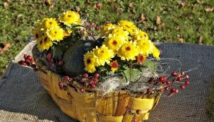 Miniaturní hybridy chryzantém jsou stále oblíbenější.