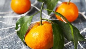 Existuje nepřeberné množství literatury atisíce způsobů, jak citrusy pěstovat.