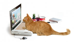 Problém se zvědavou kočkou, která občas navštěvuje váš laptop, vyřeší kartonová atrapa se škrabadlem, rozměry 33 x 27 x 22,5 cm, cena 645 Kč, www.naoko.cz
