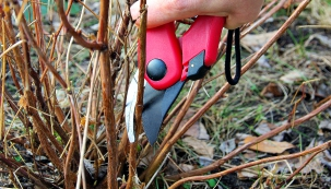 Najdeme je skoro na každé zahrádce: rybíz, angrešt, maliny, ostružiny. Zkušený zahradník Jaromír Frič říká, že se mohou dít opravdu velké divy, pokud keříky či stromky na konci zimy správně ořežete.