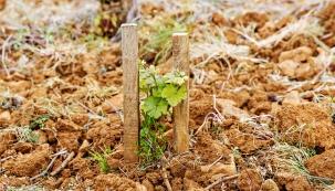 Před příchodem zimy půdu zryjte azároveň keře přihrňte zemí, to je ochrání před mrazy.
