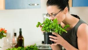 Čerstvé bylinky, koření, saláty či naťová zelenina na dochucení nedělního oběda, několik listů salátu ke grilovanému masu nebo pažitka do polévky vždycky potěší. Anení nutné mít velkou zahradu, stačí truhlík nebo mísa.
