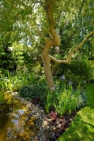 Skutečným skvostem zahrady je kroucená vrba (Salix erythroflexuosa) spodsadbou kosatce sibiřského abarvínku.