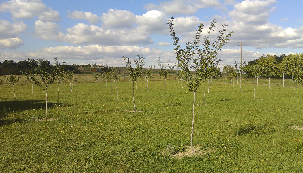 Projekt č. 15: Vytvoření malého sadu na původně zdevastovaném pozemku - Naděžda a Vlastimil Hasilíkovi: Sad je vysázen. Celkem 88 stromů, zatím. Celý je oplocený. Stráží ho socha sv. Kryštofa, ten zároveň chrání i všechny cestovatele, kteří kolem projíždějí. Nejvíce nám dalo zabrat letošní horké a suché léto – místo dovolené jsme pravidelně zalévali. Úspěšně – viz foto.