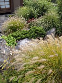 Klasická vodní jezírka sice v zahradě nenajdete, ale jistě postřehnete důmyslné řazení kamenů, které evokují plynoucí potok nebo vytvářejí přírodní útvary s dešťovou vodou. To vše v nezbytném doprovodu nejrůznějších druhů okrasných trav.