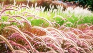 Z dotazů, které jste nám během srpna zaslali do PORADNY k tématu Podzim v zahradě, dnes zodpovíme prvních pět. Dozvíte se, zda zastřihávat okrasné trávy a hortenzie, jak zabránit zmrznutí mladých jehličnatých stromků v květináčích či proč je dobré na podzim kupit listí kolem stromů.