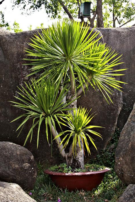 Sledujte předpověď počasí, abyste věděli, kdy přijde první přízemní mrazík. Mnohé subtropické rostliny snesou teploty kolem nuly nebo i lehký mrazík, ale rozhodně si zjistěte, zda mezi ně patří i ty vaše.
