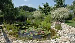 Nezapomeňte vyčistit před zimou zahradní jezírko. Napadané listí a rostlinné zbytky vytvářejí na podzim množství organického odpadu, rozkladné procesy postupně ubírají z vody kyslík a ryby ho pak v zimě mají nedostatek.