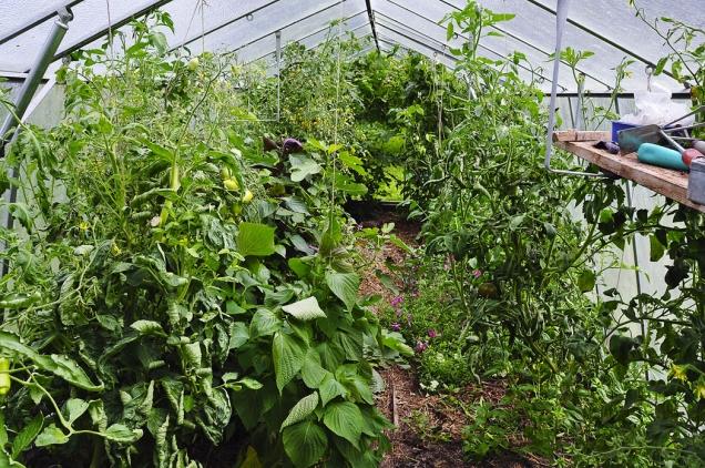 Nízká jarní vegetace veskleníku se během léta změní vestále intenzivnější džungli, vníž by ani Tarzan určitě hlady neumřel. Zkoušení stále dalších odrůd zajistí každoročně mnoho příjemných překvapení.
