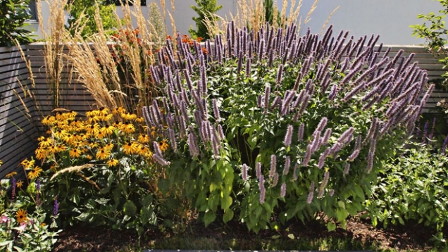 Do výsadeb byly zvoleny odolné a dlouho kvetoucí trvalky a trávy (např. Agastache, Rudbeckia).