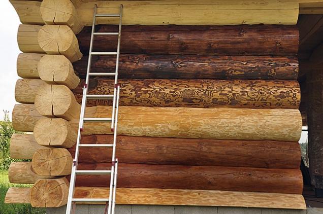 Testovací stěna srubu. Všimněte si, jak vyniká kresba dřeva u některých nátěrů a u jiných zaniká. Zvýraznění kresby pomáhá vyšší ředění terpentýnem a pigment pro první nátěr. Všechny odstíny prodávaných olejových nátěrů, které jsem testoval, kresbu z nějakého důvodu potlačovaly.