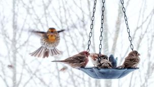 Zejména v městské zástavbě chybí dostatek zdrojů potravy pro přezimující ptáky. Ani smrkové monokultury a rozlehlá pole moc nenabízejí a ptáci potřebují naši pomoc. Odměnou bude zábava při sledování cvrkotu na krmítku a v létě zdravá zahrada.