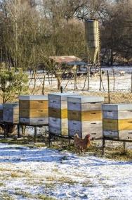 Do režimu ekologického hospodaření dobře zapadá i chov včel a sběr vlastního medu.