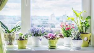 Radosti ze zeleně akvětin se nemusíte vzdávat ani vzimních měsících. Za oknem dokážou vytvořit jedinečnou atmosféru apřirozeně doplnit romantický výhled na zasypané keře aspící odkvetlé rostliny na vaší zahradě.