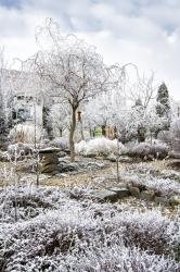 Když si dá mrazík záležet ajinovatkou obalí každé stéblo, jehličku avětev, získá zahrada téměř mystický výraz. Jako fotografka si těchto vzácných momentů nesmírně cením.