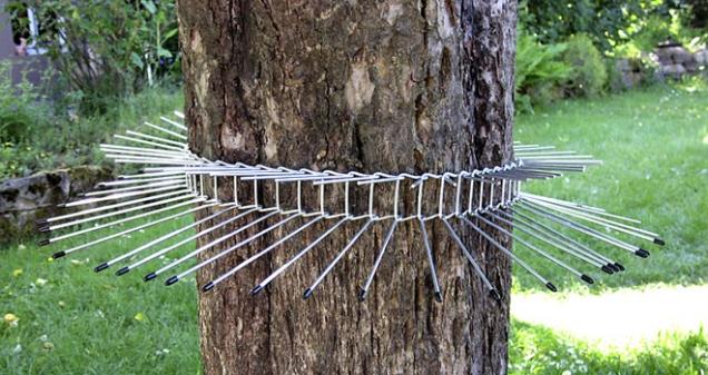 Drátěná zábrana proti kočkám ijiným predátorům se dá dobře použít na ochranu běžné budky, ale ikrmítka nebo hnízda na stromě. Kolem kmenu ji snadno navléknete. Každý díl řetězu je na koncích chráněn plastovým chráničem, takže nehrozí ani poranění kočky, pokud by se snažila ochranu překonat. Lze využít na stromy jakéhokoliv obvodu. Doporučuje se umístit ve výšce minimálně dva metry, aby nemohlo dojít kporanění osob.