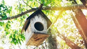 Ptačí budky jsou pouze jednou z variant, jak pomoci přírodě.
