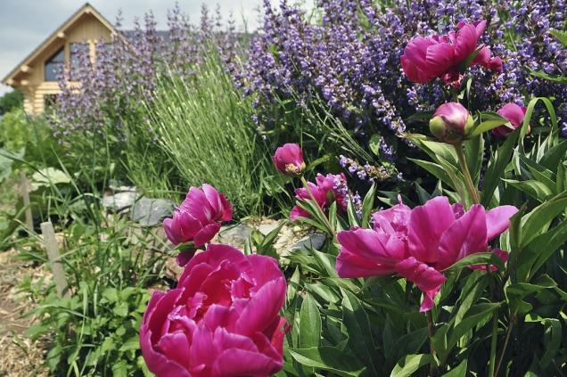 Kromě prastaré léčivky šalvěje lékařské (Salvia officinalis) stakřka zázračnými účinky existuje iřada dalších šalvějí, které tvary abarvami dodají zajímavosti každé letní zahradě. Jejich květy hýří barvami alákají motýly avčelky.