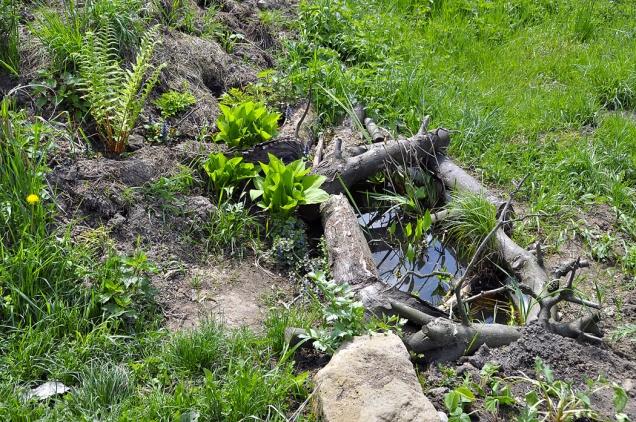 Zde je vana zakončením osázené terénní úpravy pro zpestření zahrady – dlouhého valu. Fantazii, jak okraje vany zamaskovat, se meze nekladou. Pokud byste je nechali bílé, nic se neděje, trvalky je brzy přerostou.