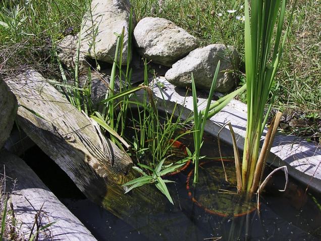 Ačkoliv nadno vany dávám trochu štěrku anějaké kameny, vodní rostliny sázím nejraději dokvětináčů zpálené hlíny, naplněných jen štěrkem. Díky tomu se tak nerozrůstají ahloubku mohu regulovat podložením cihlou.